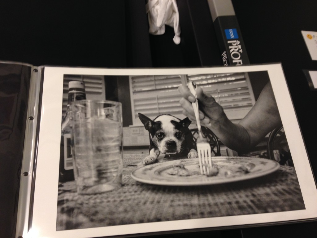 open shutter gallery james camack dog